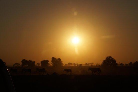Amboseli National Park: Amboseli sunset