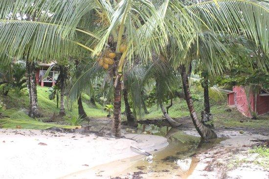Popa Paradise Beach Resort: Along the beach