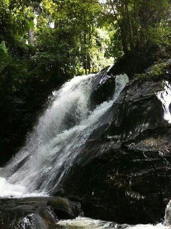Ton Nga Chang Wildlife Sanctuary: Ton nga chang