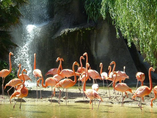 Zoo de la Palmyre : les flamants rose