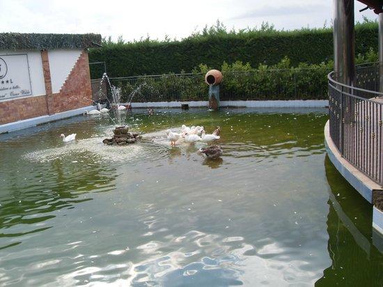 Hotel San Luca : lLago de cisnes