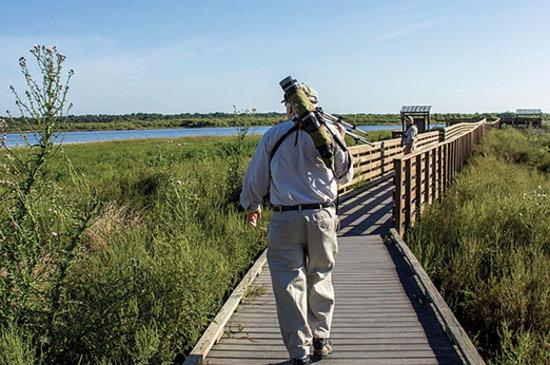 Sarasota, FL: Birding at Myakka State Park