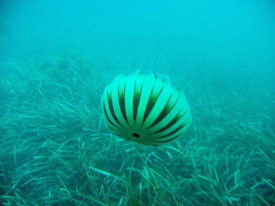 Greenwichdiving - Centro de Buceo: diving snapshot