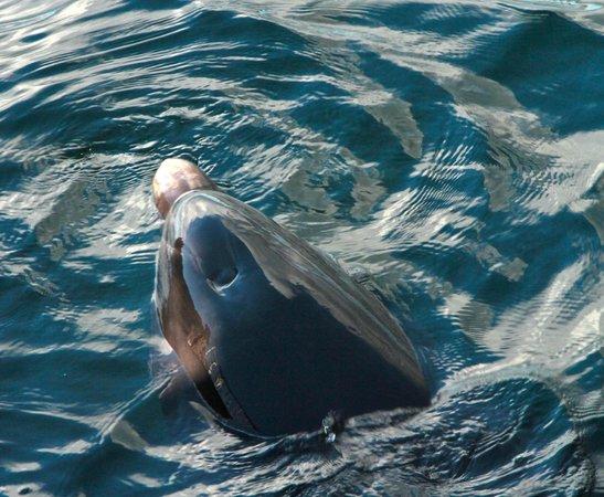 Doolin2Aran Ferries : Dusty the Dolphin
