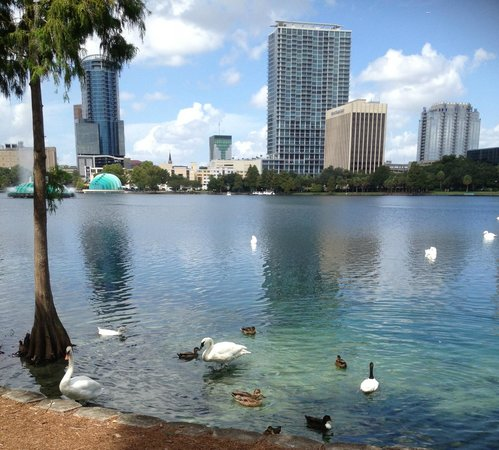 DoubleTree by Hilton Orlando Downtown: Swans at Lake Eola