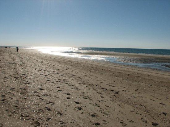 Mayan Palace: Beach at low tide