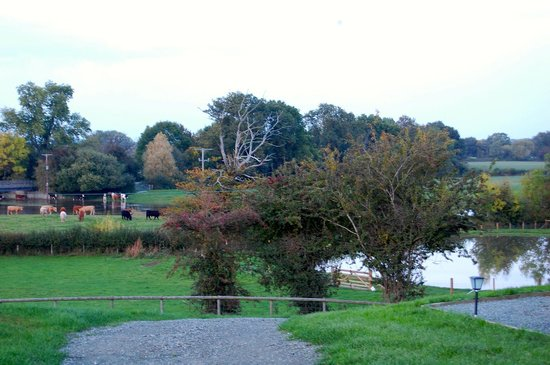Brook House Farm Bed & Breakfast : view from the camping pod!