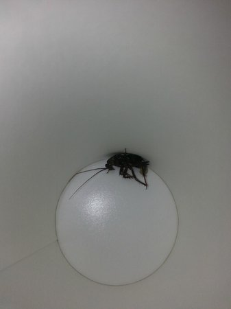 Holiday Inn Hotel & Suites Oakland Airport: Roach found in room and taken to front desk