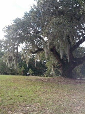 Hampton Plantation State Historic Site: George Washington saved this tree from being cut down.