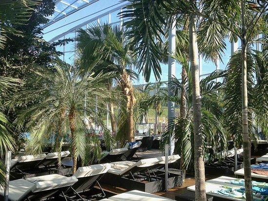 Titisee-Neustadt, Germany: зона пальмовый рай