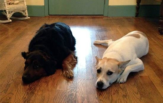 Yorkshire Inn: Pippi and Luna look forward to meeting you