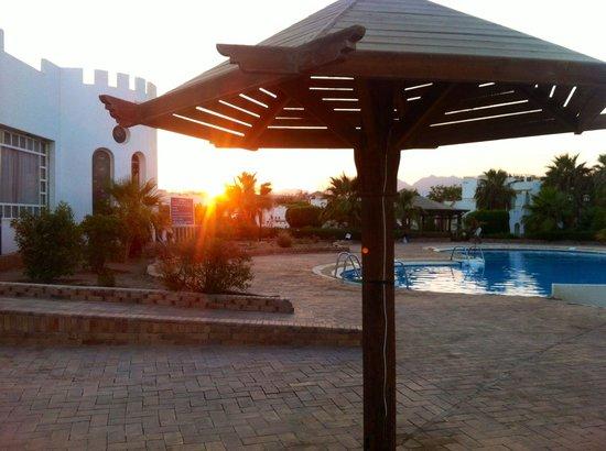 Halomy Hotel : Pool area at ouzo 'o' clock ����