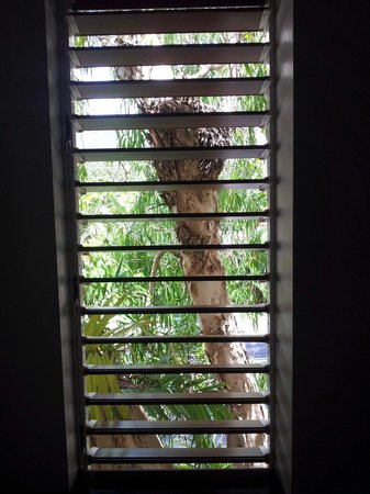 The Reef Retreat Palm Cove: View through the plantation shutters in the room