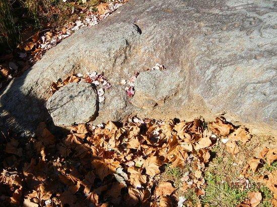 Judaculla Rock: bowl cuttings