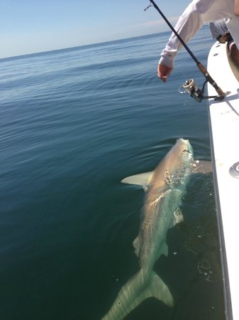 Gone Fishing Charters: My shark.  Catch and released.