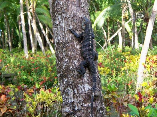 Hotel Arboleda : Sitting on our porch sizing up the iguana..