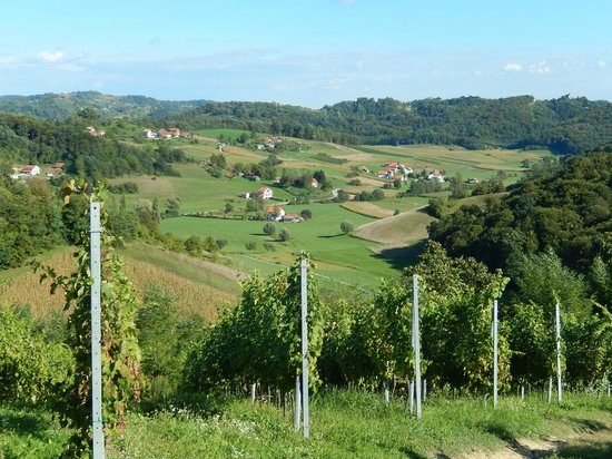 Vuglec Breg : View of the vineyards and countryside
