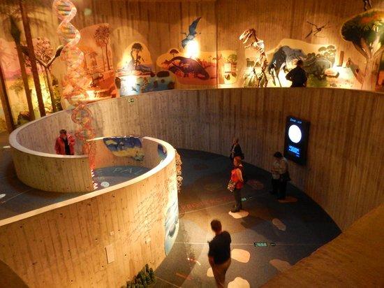 Krapina Neanderthal Museum: Museum interior