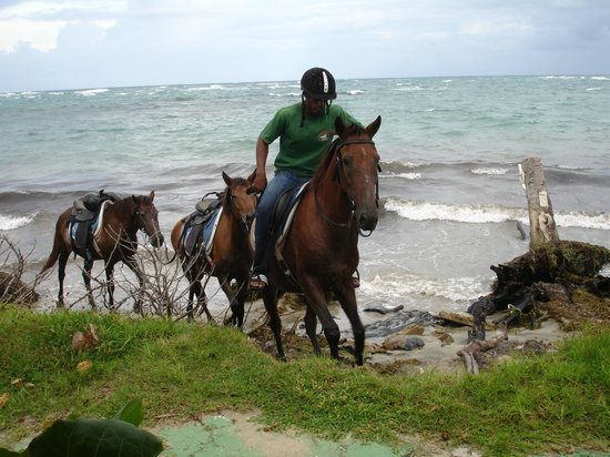 Lobster Pot Bay Beach Chalets: Rider and 3 horses passing by my patio everyday.