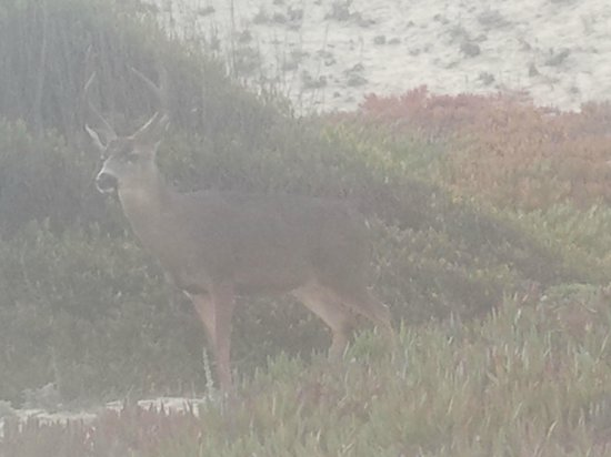 Deer Haven Inn : Nearby out for a walk