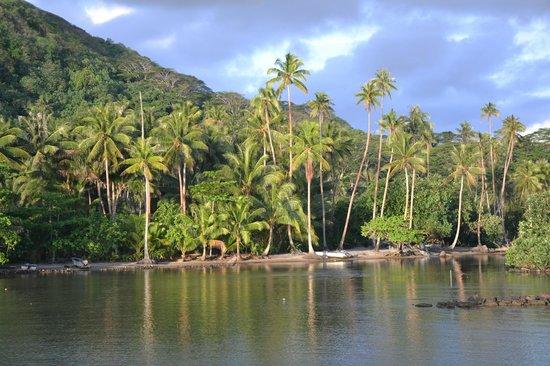 Royal Huahine : Environnement proche : magnifique aussi !