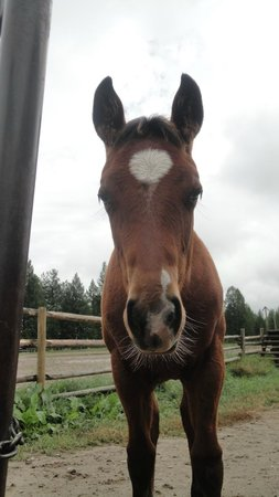 Three Bars Guest Ranch: Foal