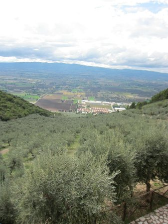 Agriturismo il Bastione: views of the olive trees and valley below