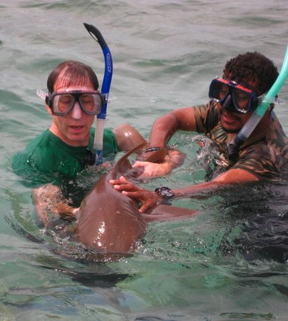 "Anwar Tours: ""Playing"" with the sharks! Thanks Omar!"