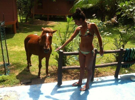 Green Garden Cabanas & Resort : The kindest pony