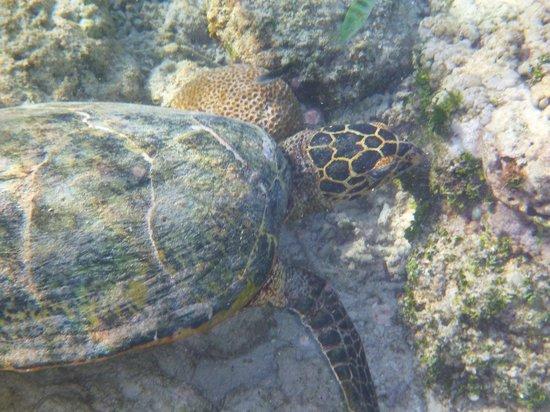 Gili Air Resort : Majestic creatures