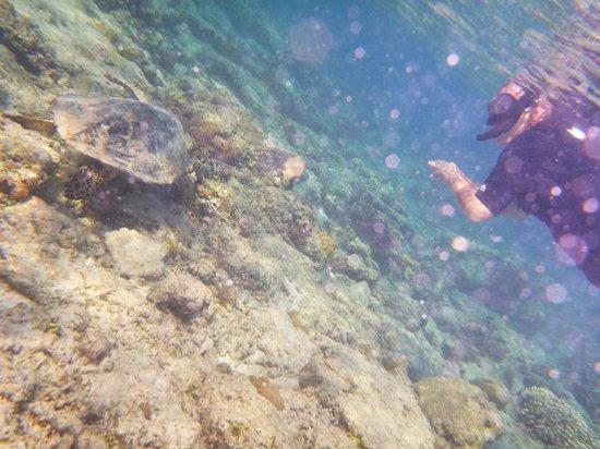 Gili Air Resort : House reef turtle