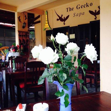 Le Gecko: The Gecko Sapa