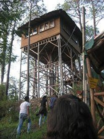 Shimla, India: Tree House