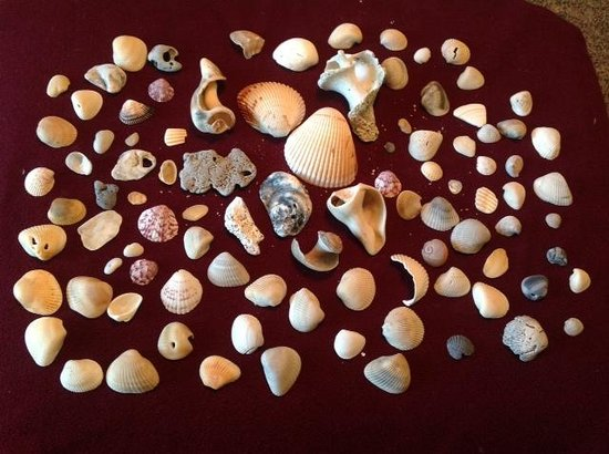 Seashell Suites Resort: We collected these on beach at resort