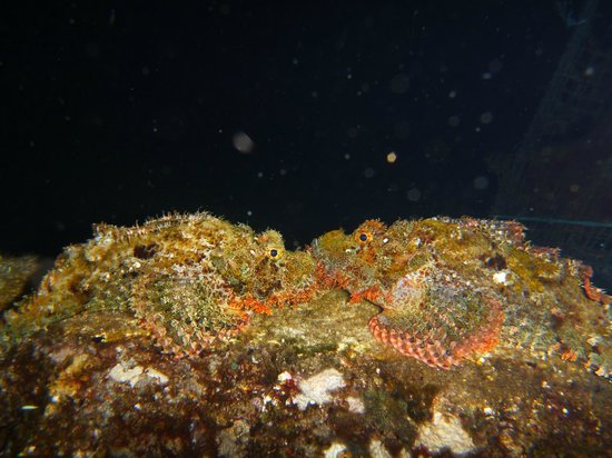 Solaluna Beach Homestay: Night dive just off the beach in front of the bungalows