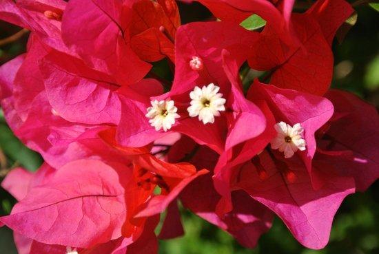 Casa Vela Guest House: Blomst