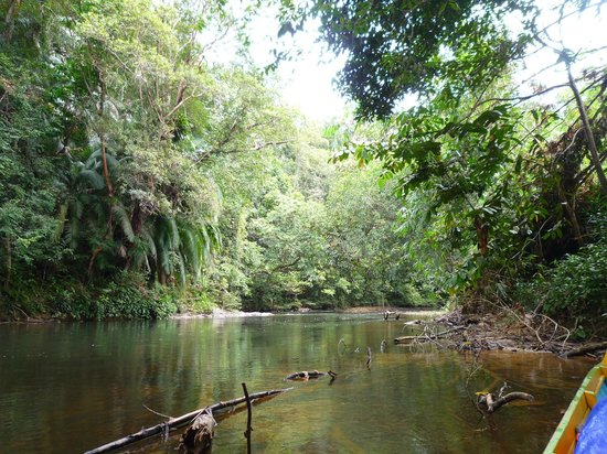 "Batang Ai National Park: the river gets quite ""closed in"" by the jungle - brilliant!!"