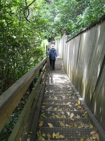 Stairs down the east side of Mount Eden