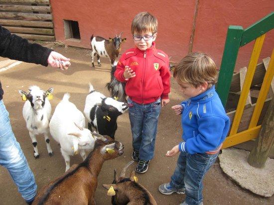 Le Jardin des bêtes : avec les chèvres naines