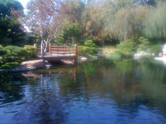 Seattle Japanese Garden : Yürüyüş için suni göl üzerinde