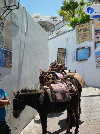 Lindos Mare Hotel : You can get a donkey, but the walk will keep/ get you fit!