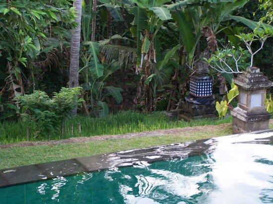 Ananda Cottages: Jardin