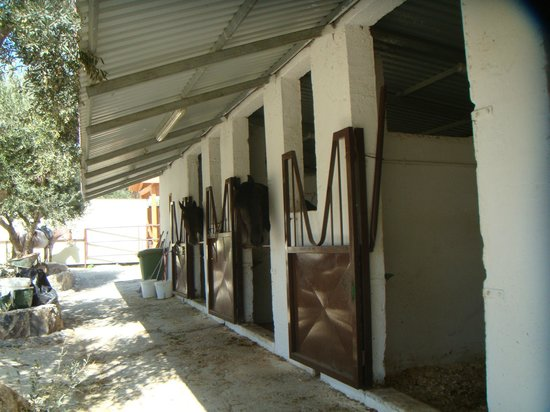 Alianthos Horse Riding : stabling