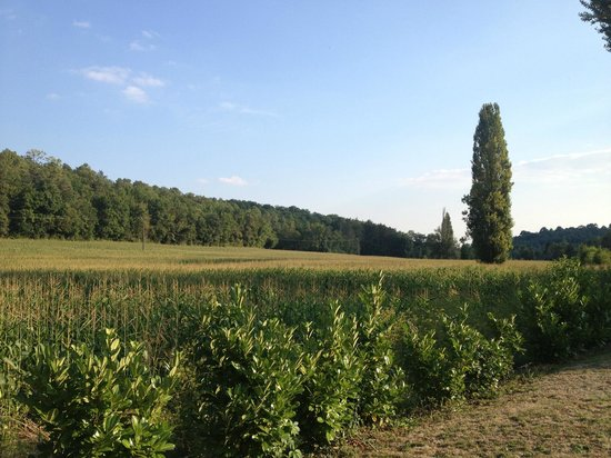 La Libertie: View of more corn fields
