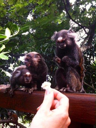 Quinta Azul Boutique Pousada: Monkeys sharing breakfast