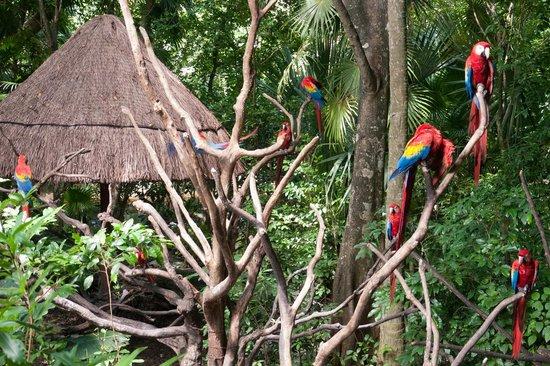 Xaman Ha Aviary: Красно-синие ара