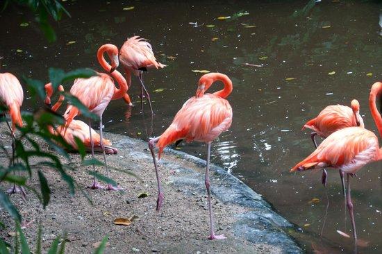 Xaman Ha Aviary: Красные фламинго
