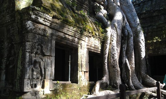 Angkor Cycle - Private Day Tours: Nature reclaiming her ground