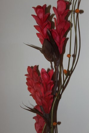 Country Inn & Suites By Carlson Gurgaon Sector 12: Ну о-о-чень красивые цветы.