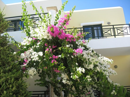 Ostria Resort & Spa : Кругом цветы